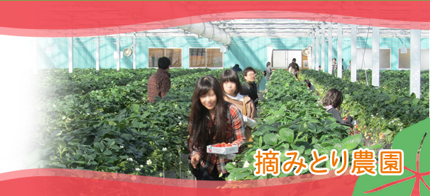 千葉 イチゴ狩り トマト狩り 収穫体験 ジャム作り教室 田舎暮らし 名水の里・久留里